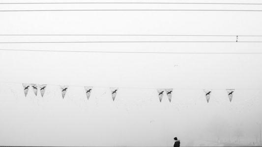 07-lifeless-birds